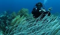 Jeff Corwin - Ocean Mysteries