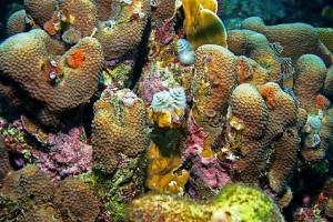 Underwater-Garden-Curacao-plants