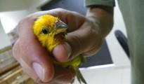 bird smugglers