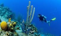 scuba_diving_coral