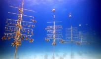 Curacao-Coral-21