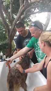 Washing Dogs COMREL (3)