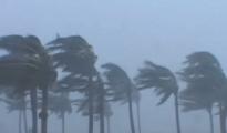 Wind-palmen