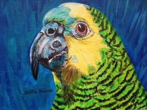Parrot s