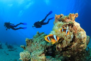 clown-fish-anemone-scuba-diving