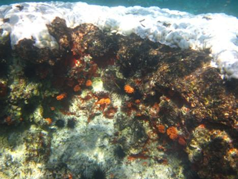 Although a quick glance at this photo may seem like it is from a winter scene in North America, a closer inspection reveals a cap of bleached coral with smaller orange flower coral seemingly unaffected below