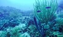 Curacao-scuba-01-cr-brent-rose