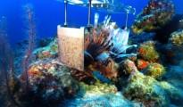 lionfish-killer-robot