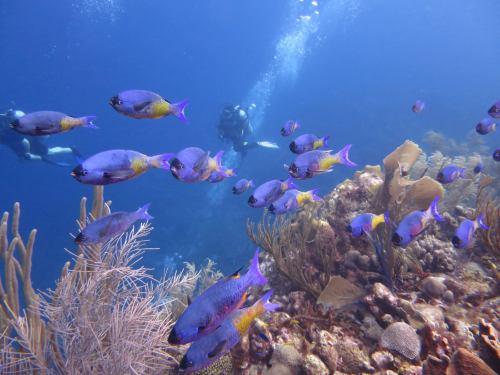 Oostpunt-vissen-Carmabi