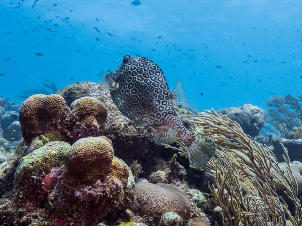 2_Curacao's Underwater World