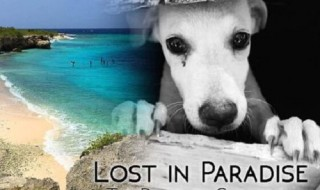 Lost-in-Paradise-dogs