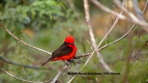 rare bird1