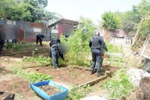 Weed plantationExtra